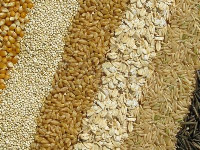 Agrogobal Grains