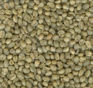 robusta and arabica coffee