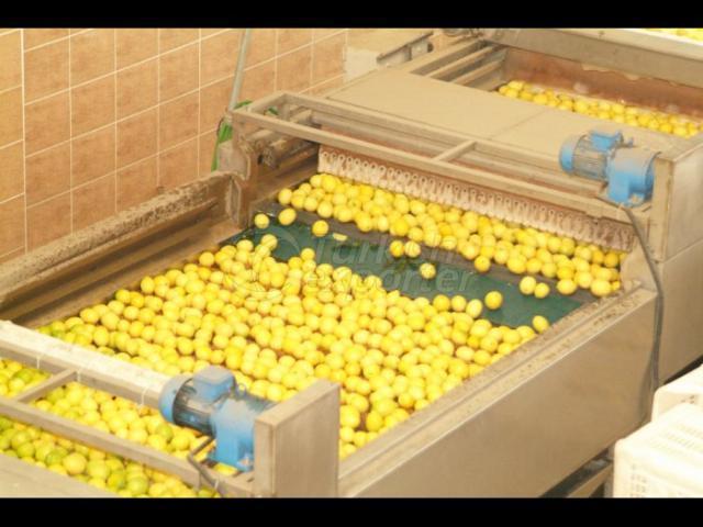 Kose Citrus Fruits