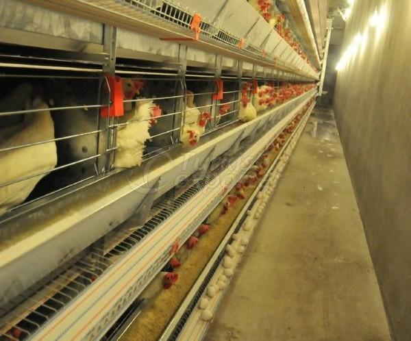 Egg Production Facilities