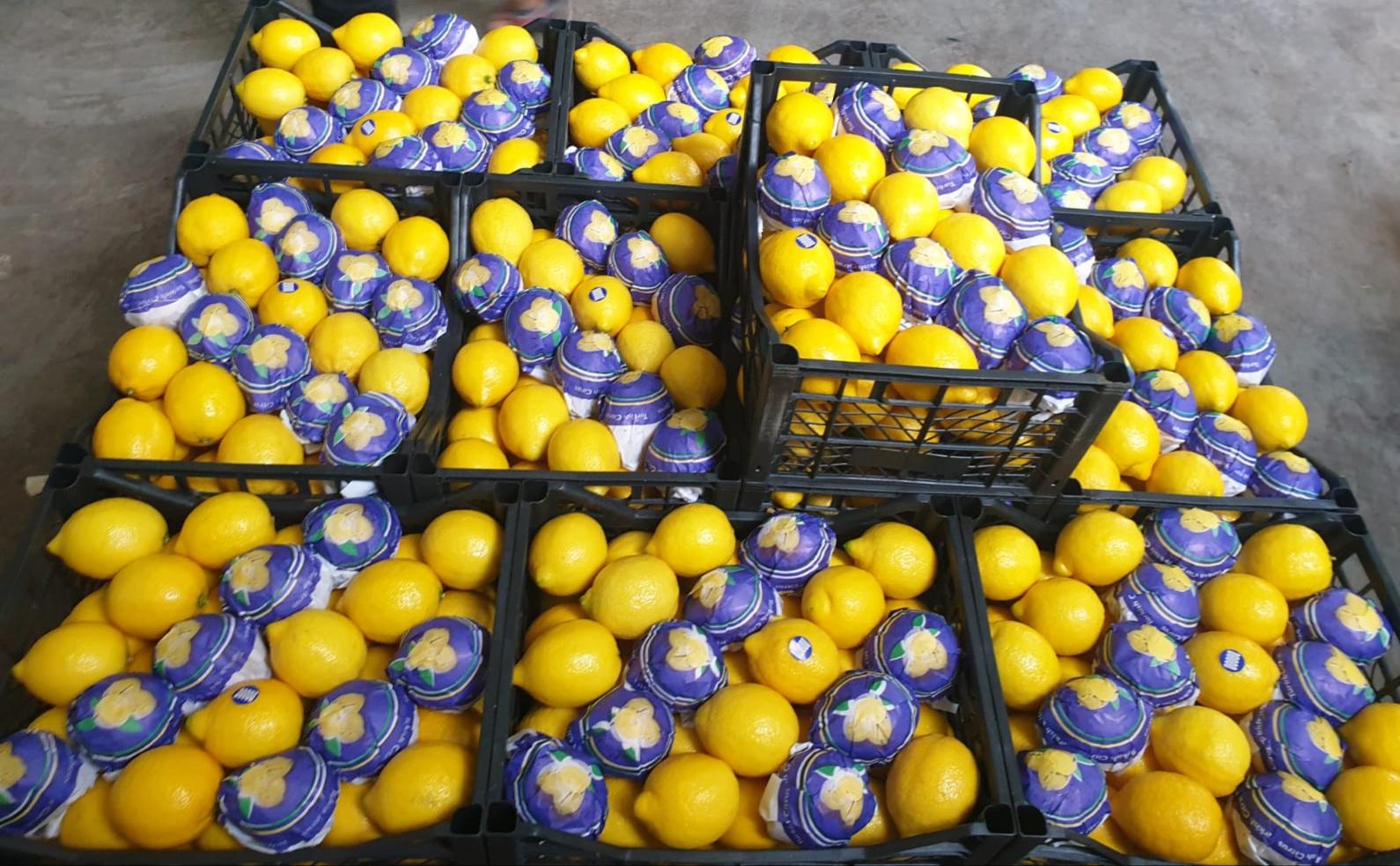 Fresh Turkish lemon