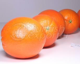 Orange Fukumoto