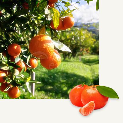 Mandarin Fremont