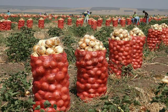 Vegetables Onion-Potatoes