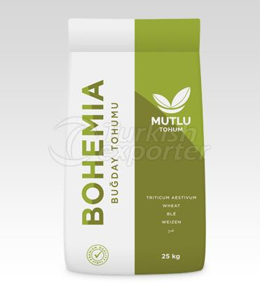 Buğday Tohumu - Bohemia