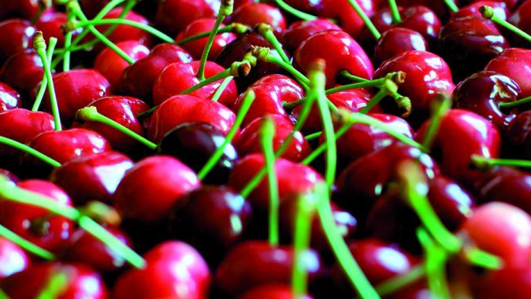 Свежие вишни