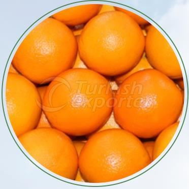 Orange Washington Navelina
