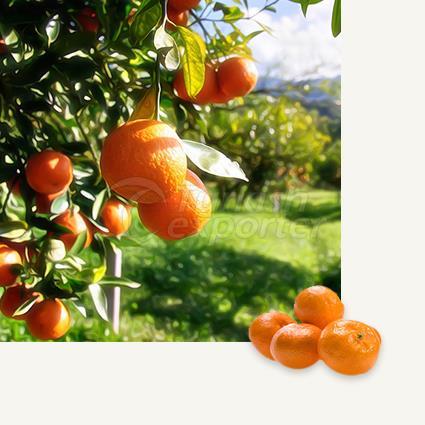 Mandarin Satsuma