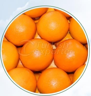 Orange Shamouti