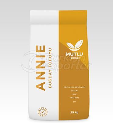 Buğday Tohumu - Annie