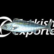 Toric Fish