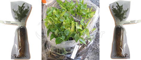Transparent Seedling Bag