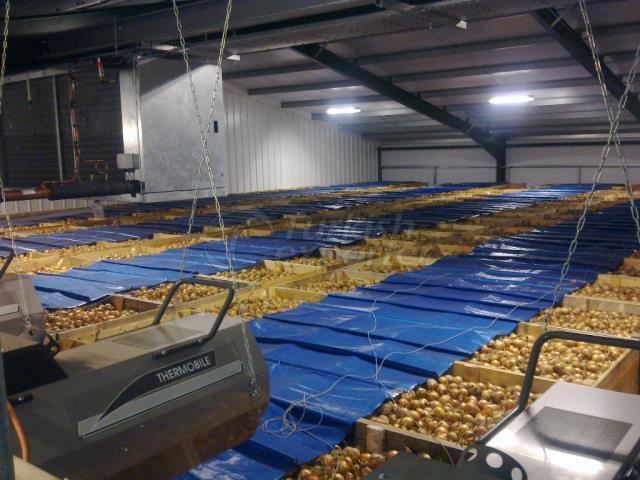 Картофельное депо