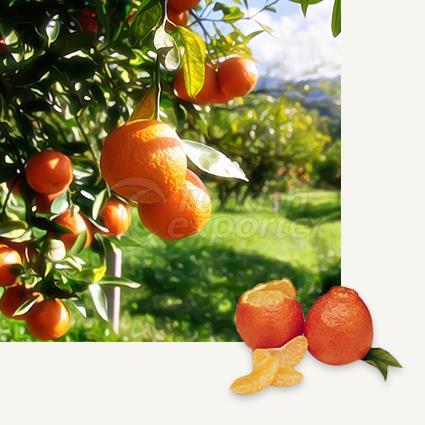 Mandarin Minneola