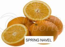 Orange Spring Navel