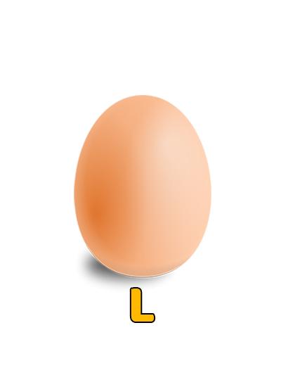 L Size Egg