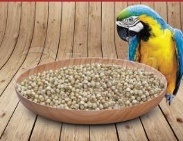 Süpürge tohumları
