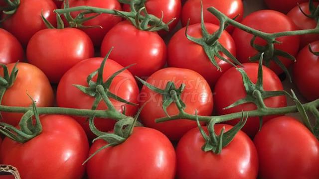 Tomates Grapollo